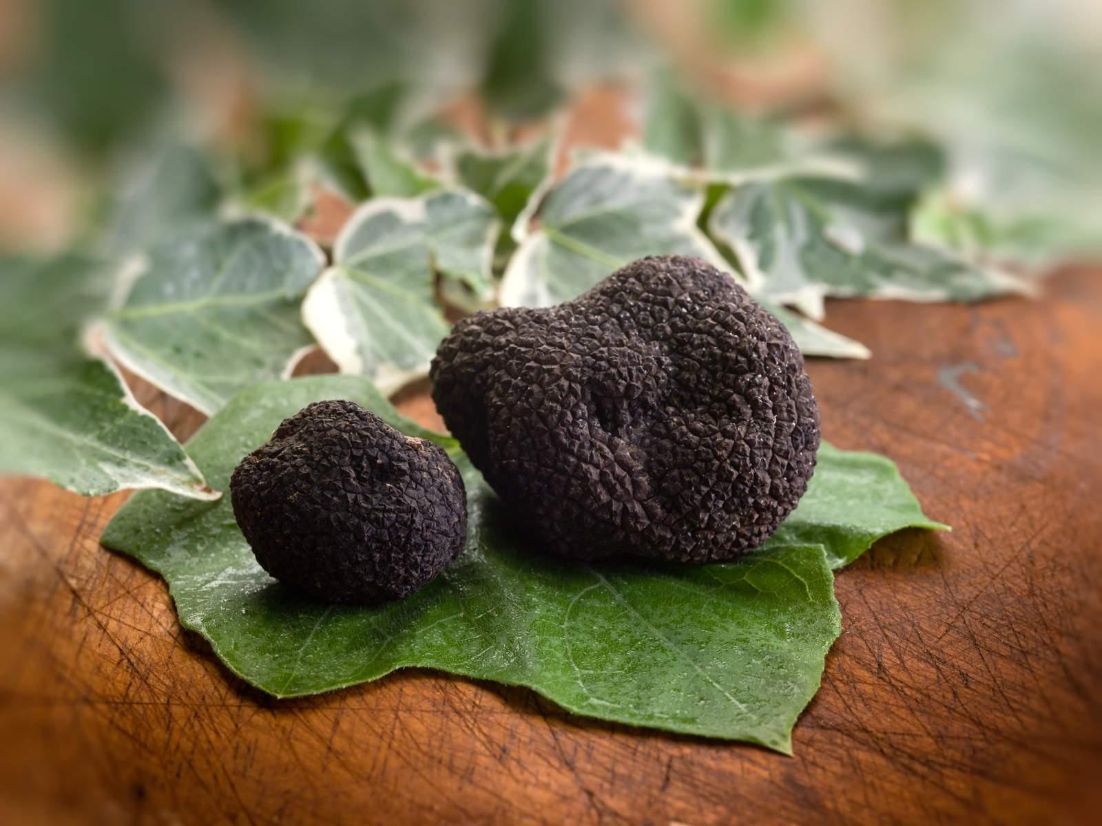 Il tartufo nero di Bagnoli è un prodotto spontaneo delle pendici montane dei Picentini.